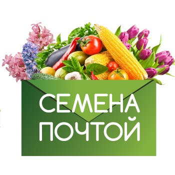 Обзор сайта https://zaseem.ru/
